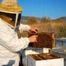 הכנה לרדיית דבש