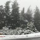 התיירנים שמחים מהשלג